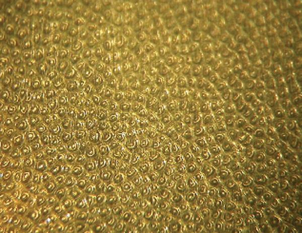 W przekroju poprzecznym rogu wypolerowana powierzchnia tworzy obraz przypominający kurdyban ponieważ włókna keratyny są znacznie twardsze od łączącej je macierzy. Powiększenie 15x..