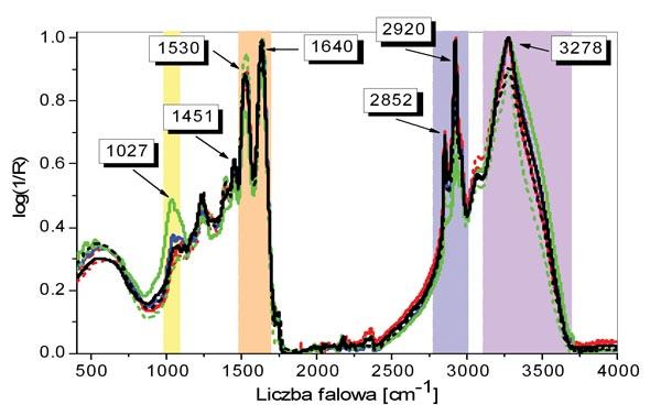 Widma podczerwone badanych preparatów wykazują znaczne podobieństwo kształtów: